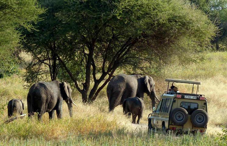 4WD standaard safari voertuig