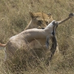 Safari Tanzania Auke web album