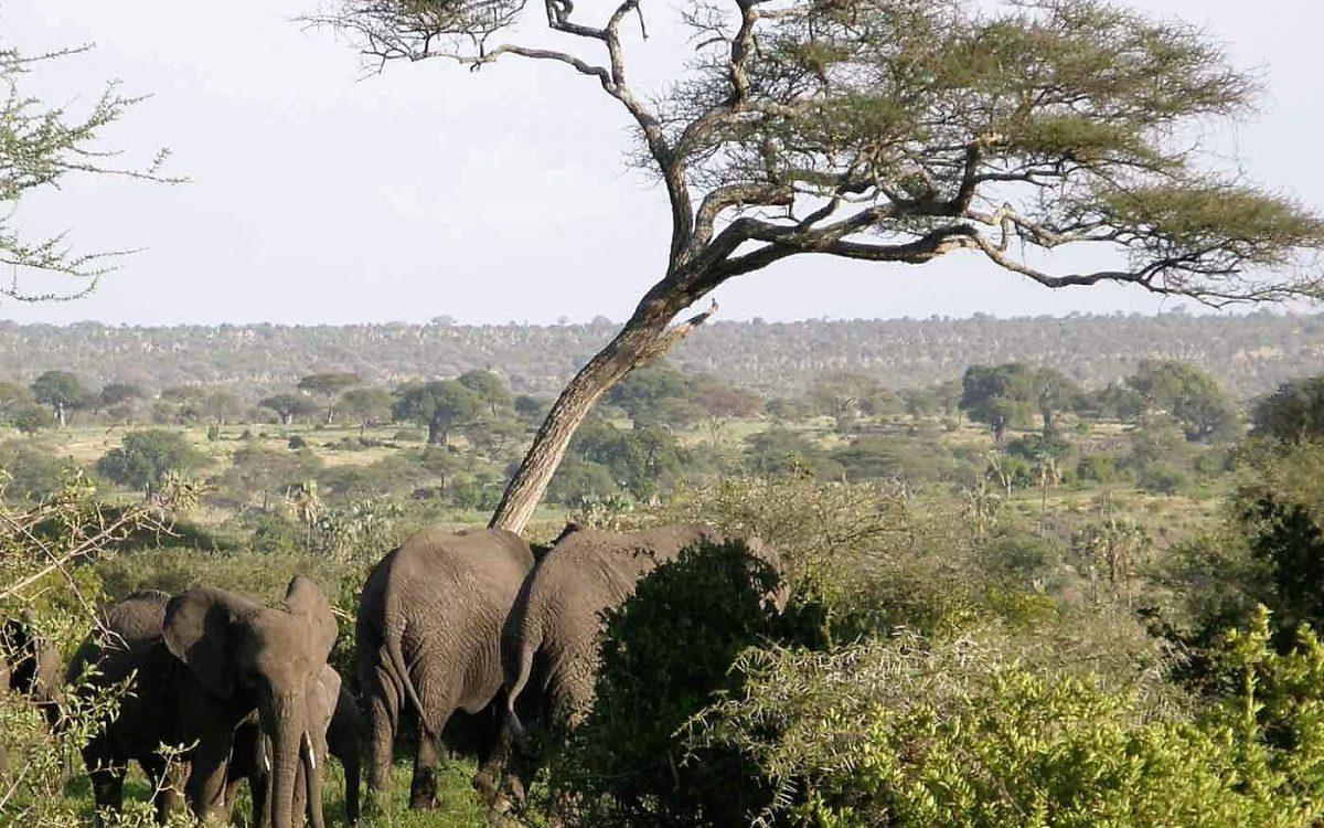 Tanzania, Tarangire NP gezicht vanaf de public campsite