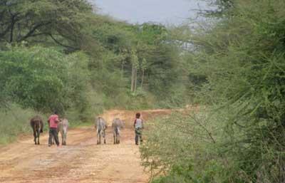 Hoofdweg naar Dodoma