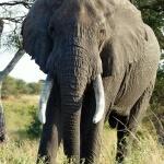 Safari Tanzania en Zanzibar JanJoris WebAlbum