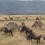 Ngorongoro CA