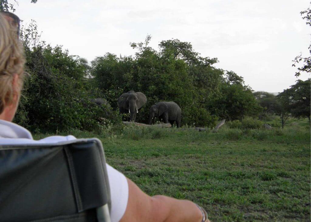 Tanzania, Tarangire NP olifanten op het kamp