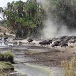 Prive Safari