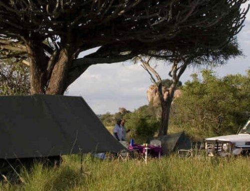 Exclusieve safari in Tanzania