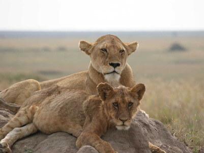 parken in Tanzania