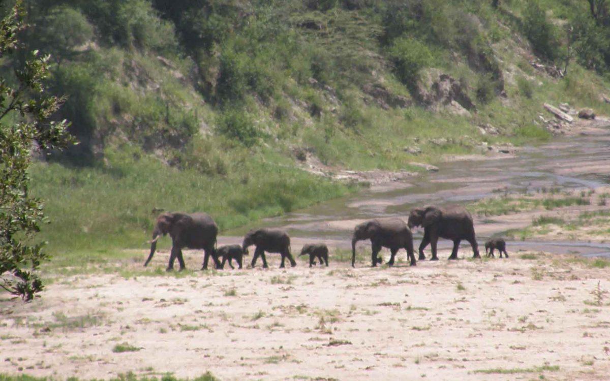 Tanzania, Tarangire NP olifanten in de bedding van de Tarangire river