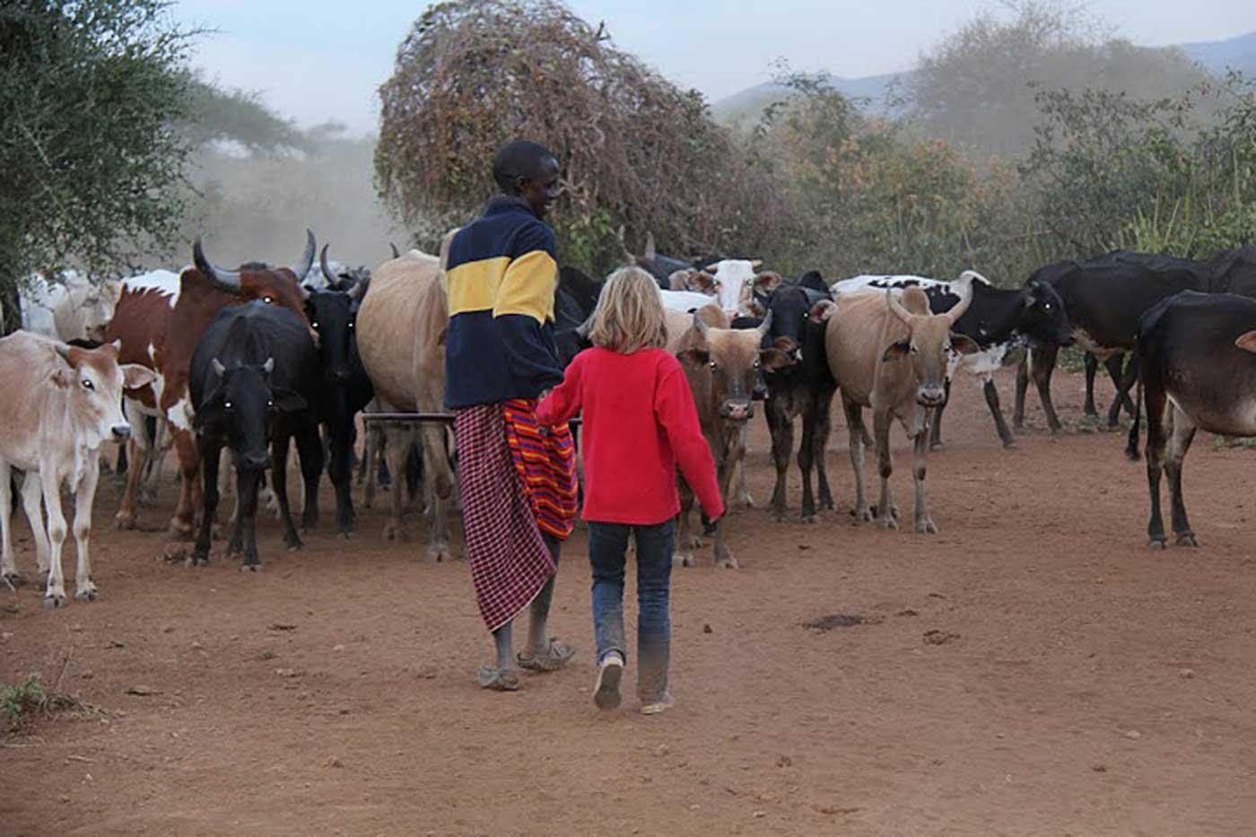 Lengasti, wandeling met koeien